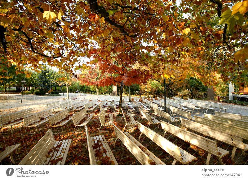 Herbstlich sonnige Tage ruhig Blatt Park gold leer Bank Oktober