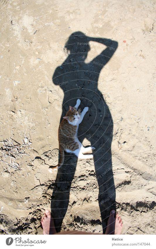 Katze im Schatten Sonne Sommer Strand Tier Katze Sand Wärme Physik Säugetier Fotografieren Selbstportrait