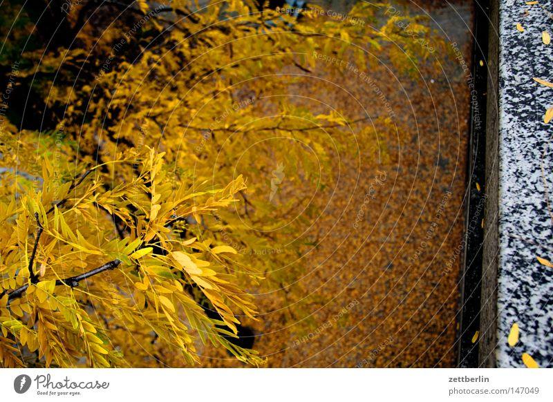 Herbst again Herbstlaub Blatt fallen gold Blattgrün Hof Platz Bürgersteig Fuge Baum Baumstamm Pflanze Vergänglichkeit goldener herbst runterfallen herabfallen
