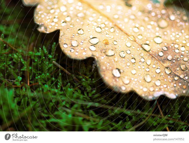 In einem Land vor unserer Zeit - Herbsttag Natur schön grün Farbe Wasser Erholung Blatt ruhig kalt klein außergewöhnlich braun Erde liegen frisch