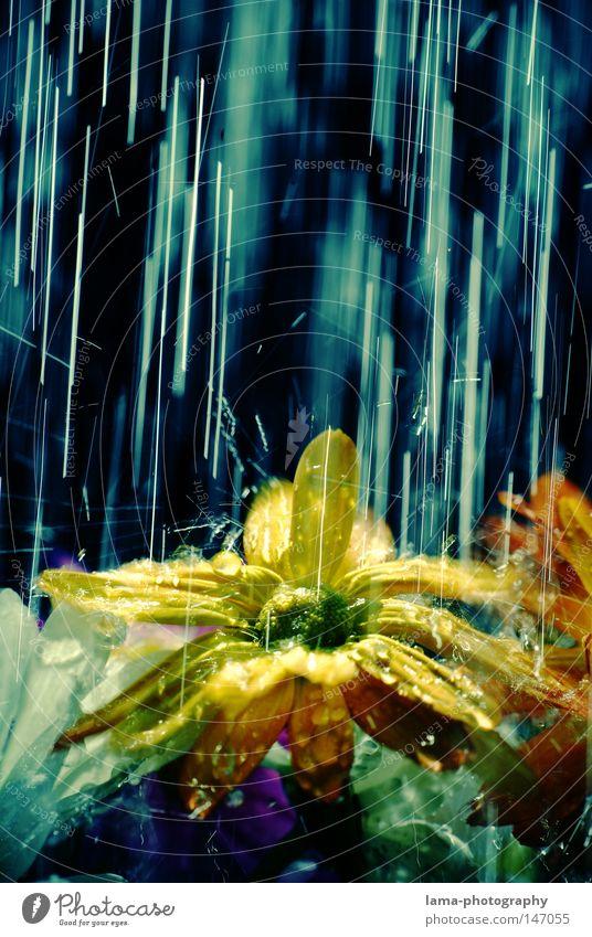 still raining Regen Wassertropfen Gewitter Unwetter Herbst Herbstwetter nass kalt Sonne Wetter Blume Pflanze Baum Blatt grün Park Erfrischung Blüte