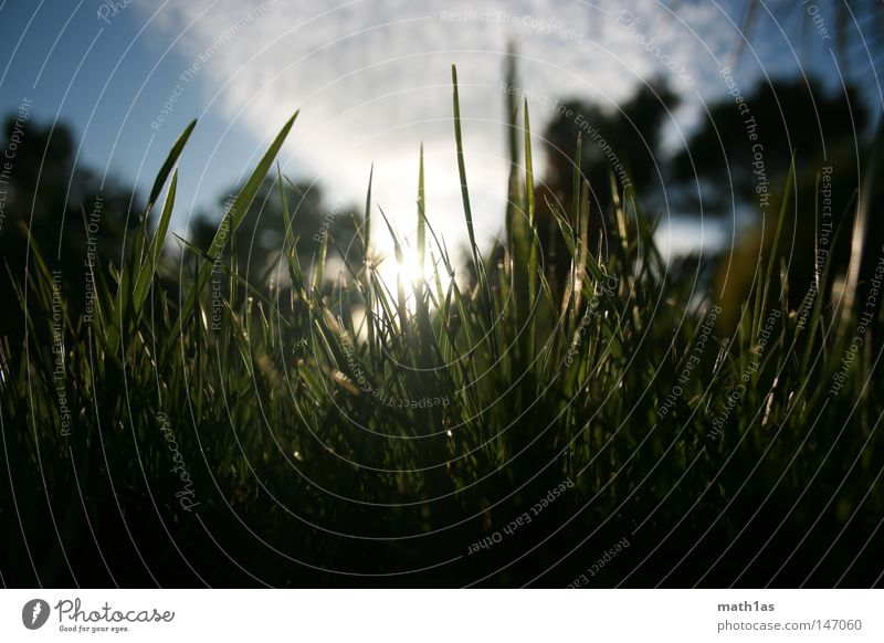 Don't walk on grass smoke it Himmel Sonne grün blau Sommer schwarz Wolken Gras Frankreich