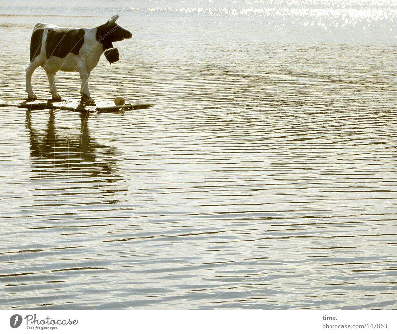 Urlaub vom Bauernhof Wasser See Wellen Glocke fahren stehen obskur Kuh Rind Surfen skurril bizarr Klimawandel Tier Futurismus Wunder