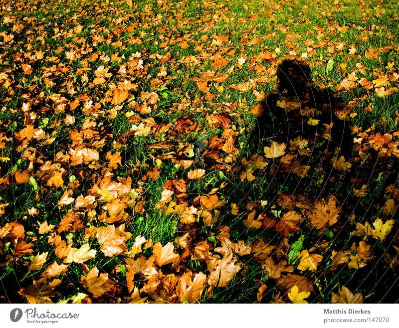 Herbstschatten Natur Ferien & Urlaub & Reisen grün schön Farbe Baum Sonne Erholung rot Blatt ruhig Freude Winter kalt gelb Wärme
