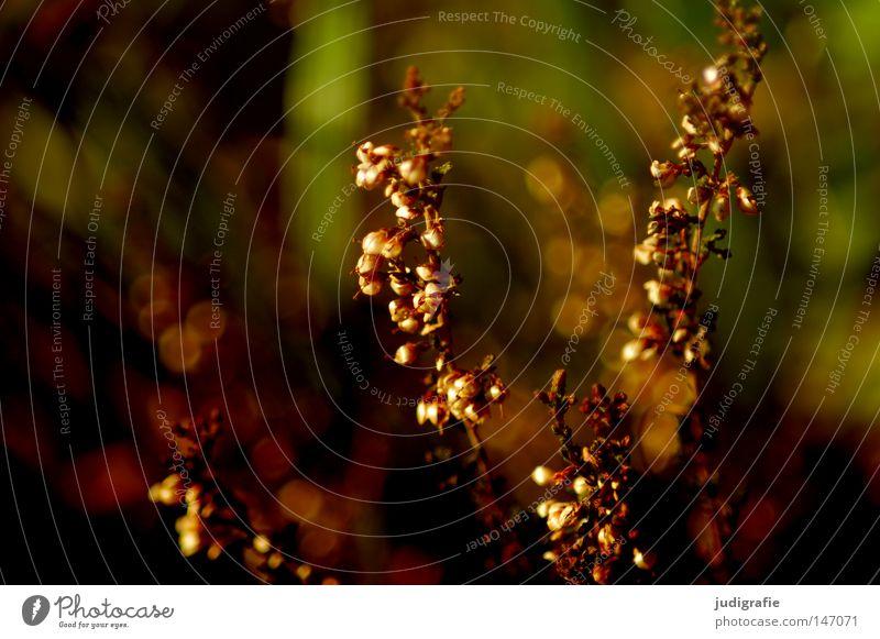Wiese Natur schön Farbe Umwelt Herbst Gras glänzend einfach zart Stengel bescheiden Unkraut Heilpflanzen
