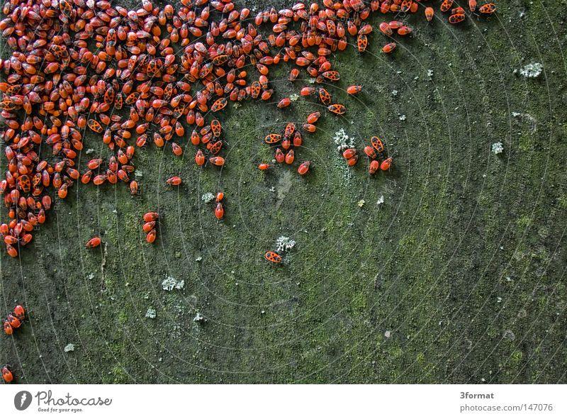 MASSENFLUCHT grün rot Tier Stein Stimmung Park Feste & Feiern Angst Zusammensein Brand geschlossen Ordnung Kapitalwirtschaft Platz mehrere Wildtier