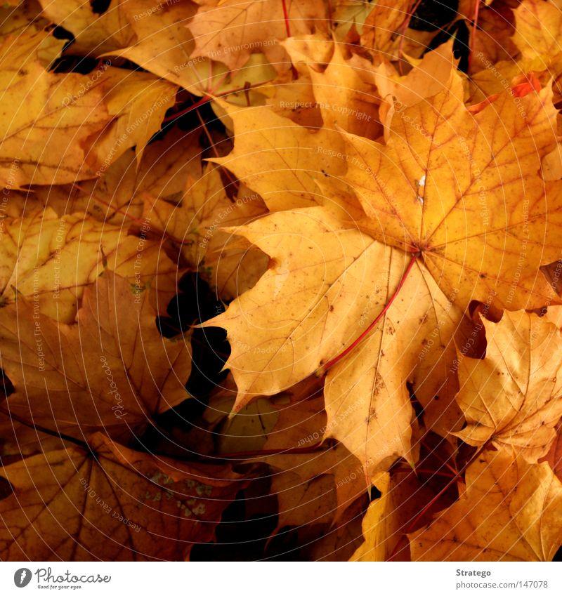 Der Herbst ist da... Natur schön Baum Farbe Blatt Landschaft gelb dunkel kalt Nebel Boden Trauer fallen Jahreszeiten Verzweiflung