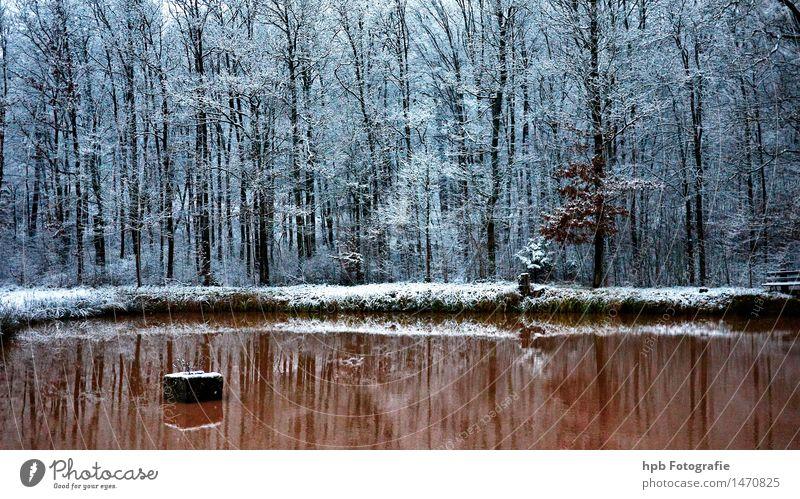 winterlicher Karpfenweiher Natur Landschaft Wasser Winter Wetter Eis Frost Schnee Feld Wald Teich Erholung wandern ästhetisch Coolness kalt braun weiß Stimmung