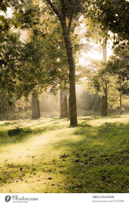 Märchenwald Wald Natur Herbst Blatt Baum Nebel ruhig Sonne Gegenlicht grün braun Gefühle Trauer Verzweiflung