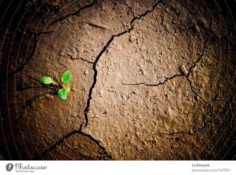 vom leben und sterben Erholung ruhig Ausflug wandern Wirtschaft Landwirtschaft Forstwirtschaft Umwelt Natur Landschaft Pflanze Tier Urelemente Erde Frühling