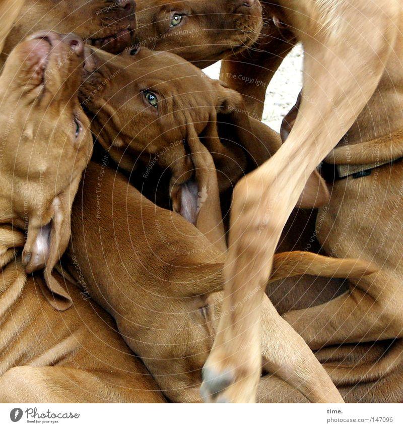 Hundehaufen schön Spielen Tierjunges Beine braun Zusammensein Kraft Fröhlichkeit Mut Leidenschaft Lebensfreude durcheinander Pfote Säugetier
