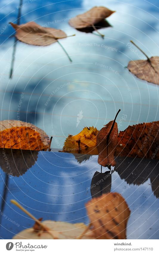 Gelandet im Himmel. frisch Herbst Wolken weiß kalt Blatt braun gelb rot Vergänglichkeit Ausgelassenheit Spiegel Reflexion & Spiegelung Anmut zart zerbrechlich