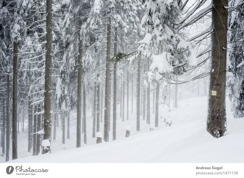 White Space Natur weiß Baum Landschaft Einsamkeit ruhig Winter Wald kalt Umwelt Schnee natürlich Wetter Eis wandern Idylle