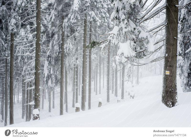 White Space Umwelt Natur Landschaft Winter Wetter Eis Frost Schnee Baum Fichtenwald Nadelwald Wald wandern kalt natürlich trist weiß Abenteuer Einsamkeit Idylle