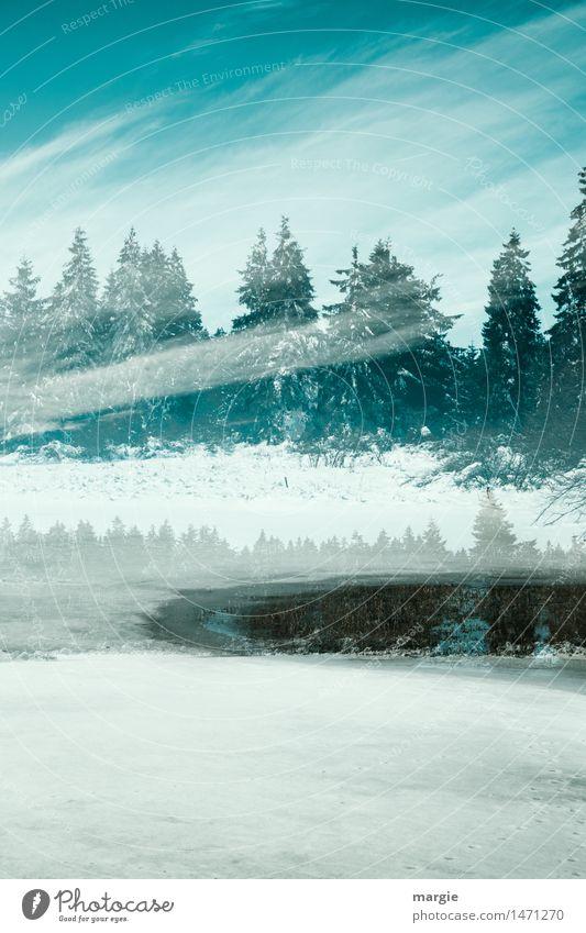Frohe Weihnachten! Eine Winterlandschaft mit Schnee, Tannen und einem See Ferien & Urlaub & Reisen Tourismus Winterurlaub wandern Feste & Feiern Natur