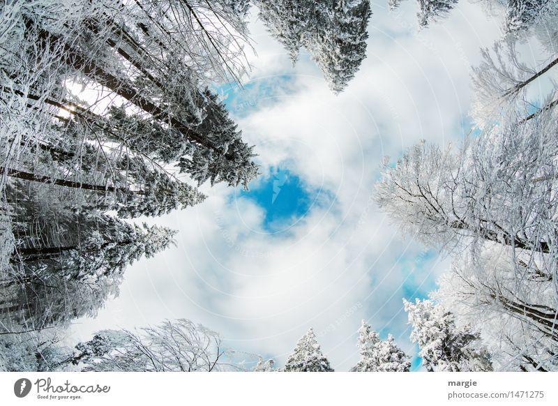 Merry Christmas! Winterliche Tannen ragen in einen Himmel mit Wolken. Genau in der Mitte ist ein blaues Loch Ferien & Urlaub & Reisen Tourismus Ferne Schnee
