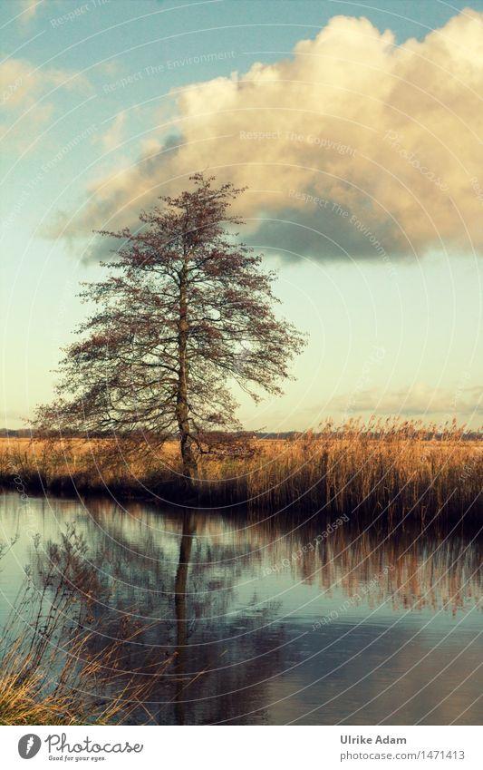 Am Fluß Natur Landschaft Wasser Himmel Wolken Winter Baum Flussufer Moor Sumpf Hamme Teufelsmoor Worpswede Deutschland wandern außergewöhnlich blau braun