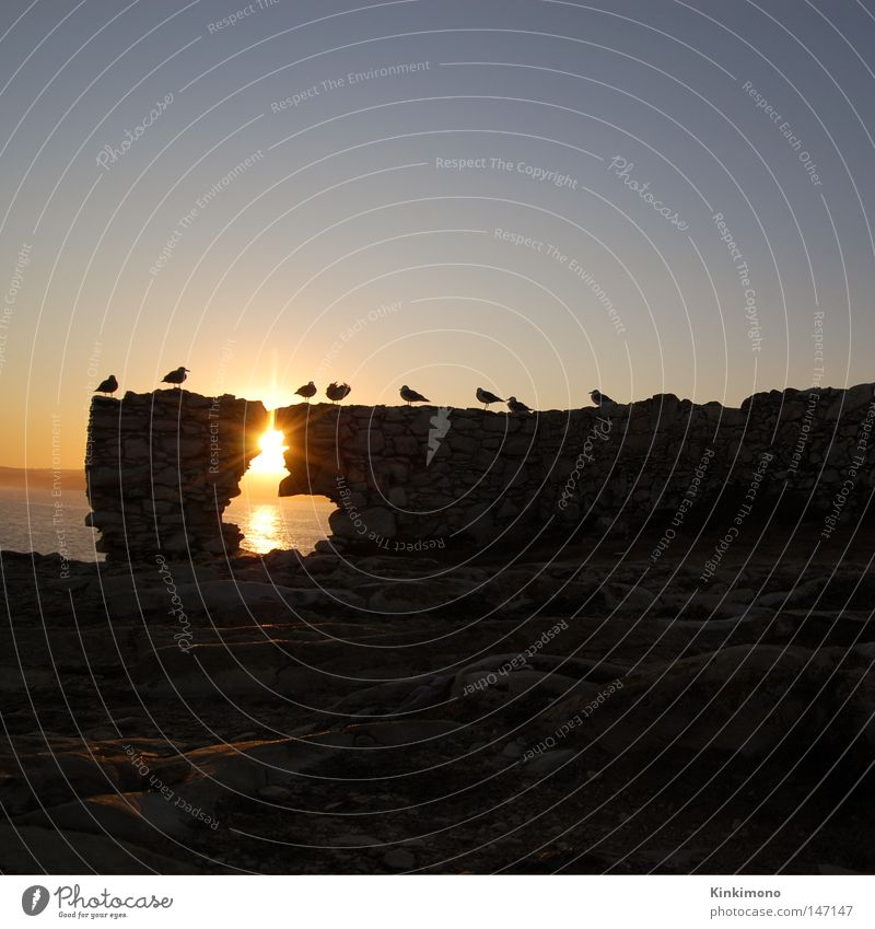 Black Hole Sun Meer Sonnenaufgang Vogel Möwe Portugal Reflexion & Spiegelung ruhig Wasser Felsen Baleal Himmel Morgen