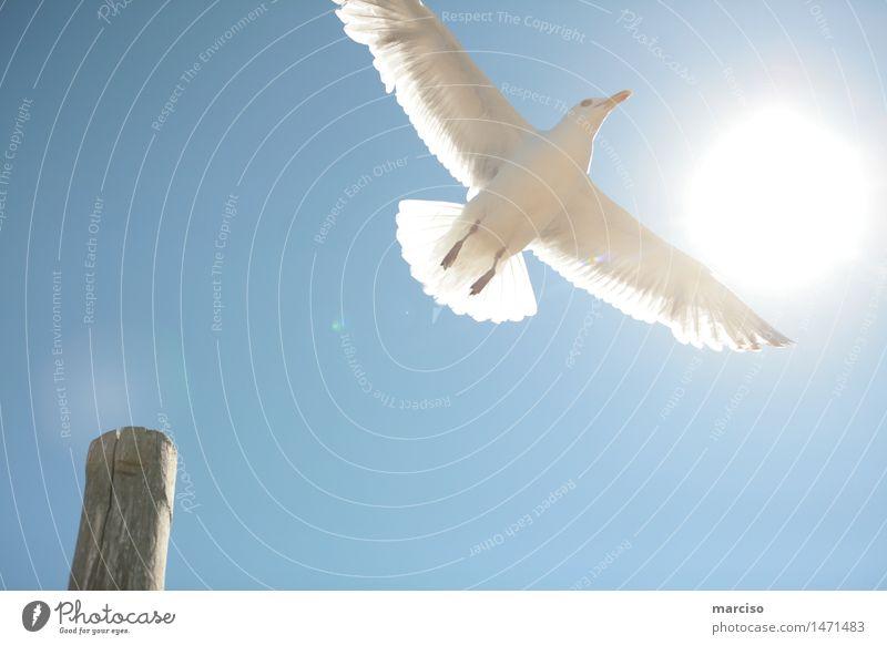 freedom Umwelt Natur Himmel Wolkenloser Himmel Sonne Sonnenlicht Sommer Wetter Schönes Wetter Hafenstadt Tier Vogel Möwe 1 Erfolg frei Gefühle Glück