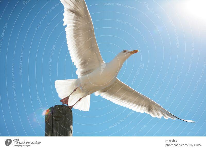 Sprung ins Glück Natur schön Erholung ruhig Tier Leben Liebe Vogel Zusammensein Freundschaft träumen Zufriedenheit frei elegant Kraft Erfolg