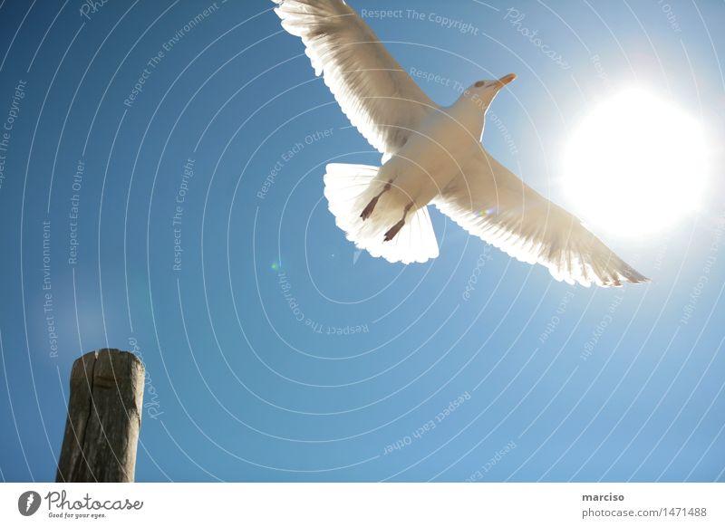 Möwe Umwelt Natur Wolkenloser Himmel Sonne Sonnenlicht Sommer Wetter Schönes Wetter Tier Vogel 1 Erholung fliegen genießen träumen elegant Unendlichkeit positiv