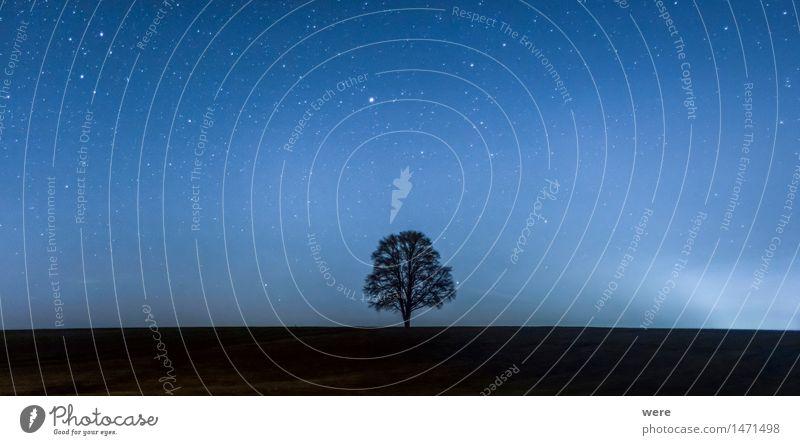 !Trash! 2015 Noch ein Baum... Landwirtschaft Forstwirtschaft Natur Landschaft Pflanze Nachthimmel Herbst Blatt Wiese Feld Wald Blühend kalt Umweltschutz