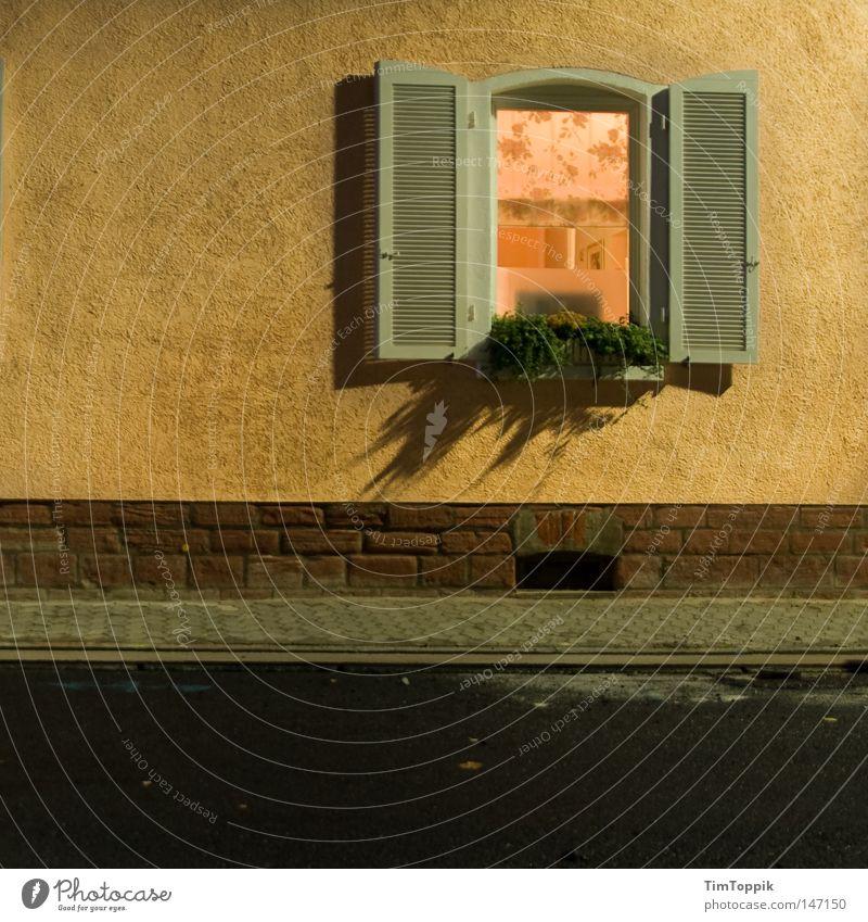 Home Sweet Home Blume Haus Straße Fenster Wohnung Dekoration & Verzierung Häusliches Leben Wohnzimmer Vorhang gemütlich Gardine Heimat heimwärts privat