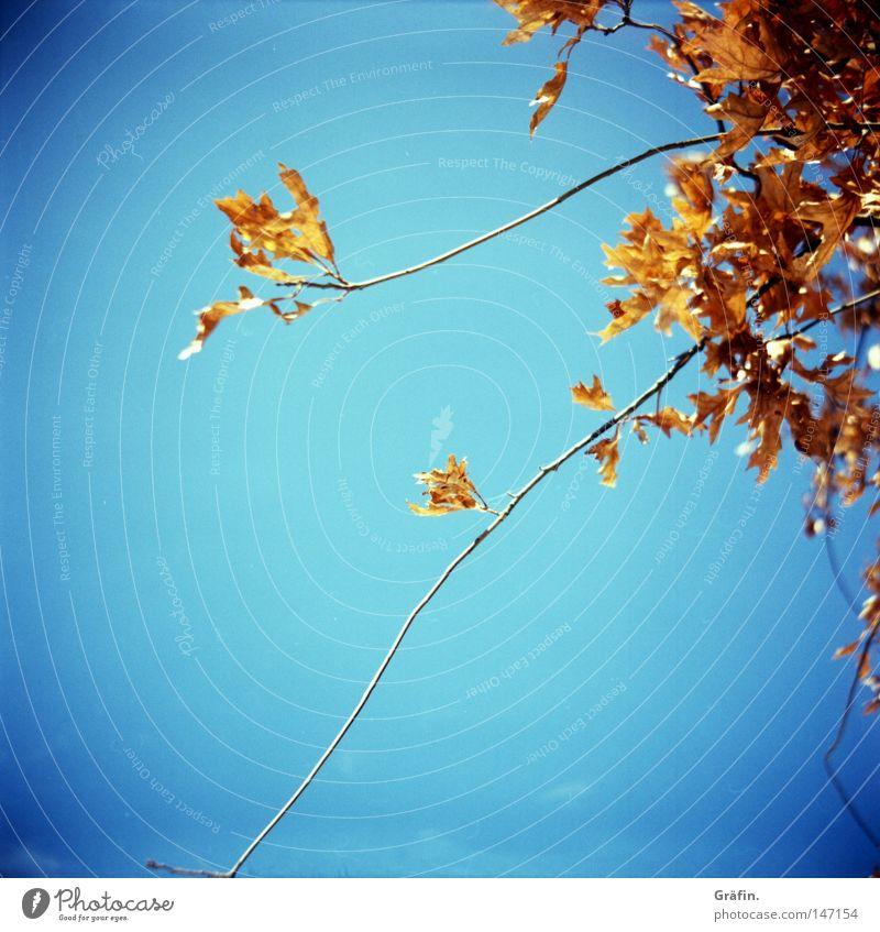 [HH 3.0] Herbst Baum Blatt fallen gelb trocken rot Schönes Wetter Vergänglichkeit Himmel Zweig Farbe orange blau Sonne herbstlich trockene Blätter