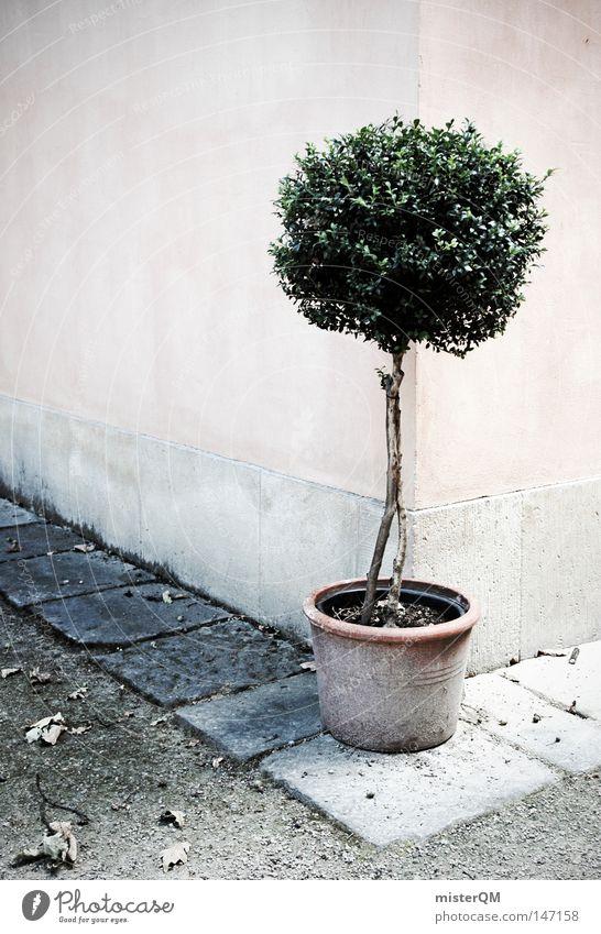Somewhere In Italy. Sträucher Garten Idylle Topfpflanze Mauer Ecke Straßenecke Italien Süden Toskana Pflastersteine Gärtner Baum gepflegt Pflanze grün rot trüb