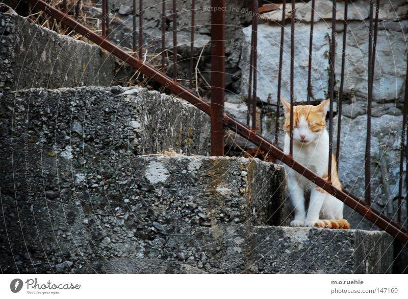 Tiger(in) ruhig Tier Katze Treppe süß weich Vertrauen Idylle niedlich tierisch Säugetier Hauskatze Tierjunges Plüsch
