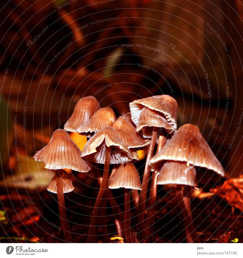 Gruppenfoto Natur Pflanze gelb Leben Herbst Tod Holz Lampe braun Lebensmittel Wachstum Ordnung mehrere Ernährung Kultur Jahreszeiten