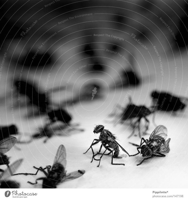 Schlachtfeld schwarz Tod Fliege fliegen Trauer mehrere kaputt Schmerz Müdigkeit viele kämpfen Krieg Friedhof kleben Haufen sinnlos