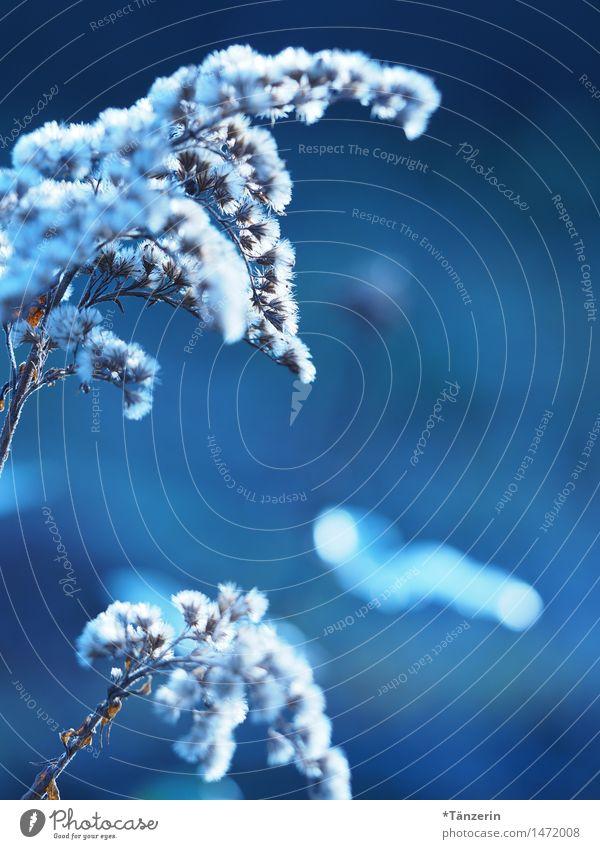 shades of blue Natur Pflanze blau schön Blume Winter Herbst Wiese Gras natürlich Garten Park frisch ästhetisch Schönes Wetter