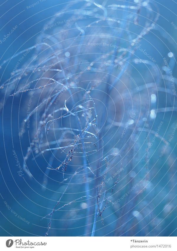 zartes Blau Natur Pflanze blau schön Winter kalt Herbst Wiese Gras natürlich Garten frisch ästhetisch Schönes Wetter