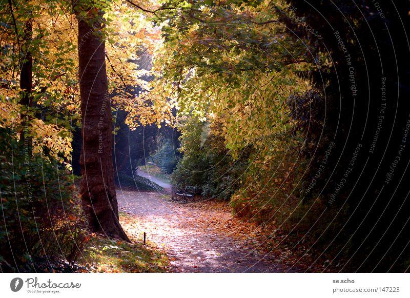 Oktoberlicht Herbst Licht Baum Blatt mehrfarbig ruhig Stimmung Park Schatten Baumstamm Wege & Pfade Bank Lampe gold