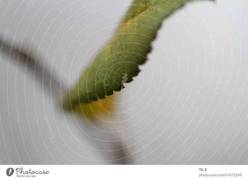 Blatt Natur Pflanze grün schön ruhig Winter Herbst natürlich grau elegant authentisch ästhetisch Blühend einfach einzigartig