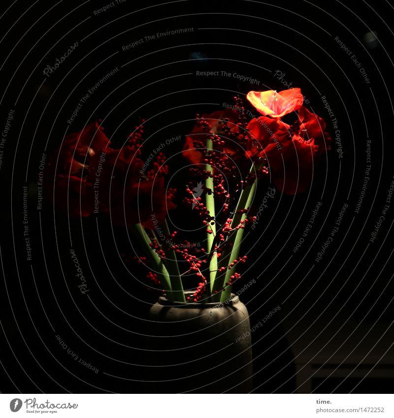 Night Fever Natur grün schön rot Einsamkeit dunkel Leben Blüte Traurigkeit Design Kraft ästhetisch Kreativität Vergänglichkeit Hoffnung Neugier