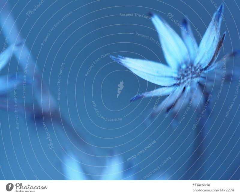 Blaue Blume Natur Pflanze Winter Schönes Wetter Blüte Garten Park ästhetisch Freundlichkeit einzigartig kalt natürlich schön blau weiß Romantik ruhig Farbfoto