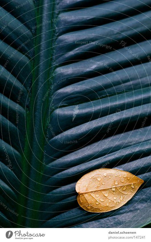 Blatt auf Blatt Herbst abstrakt Hintergrundbild graphisch Wand grau gelb grün Gras Wiese braun Jahreszeiten Wachstum Makroaufnahme Vergänglichkeit Kontrast