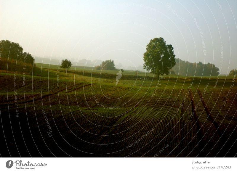 Morgens Feld Landschaft Landschaftsformen Baum Hügel Wellen Nebel Dunst Herbst Natur Umwelt Mecklenburg-Vorpommern nordisch schön Landwirtschaft Ackerbau Spuren