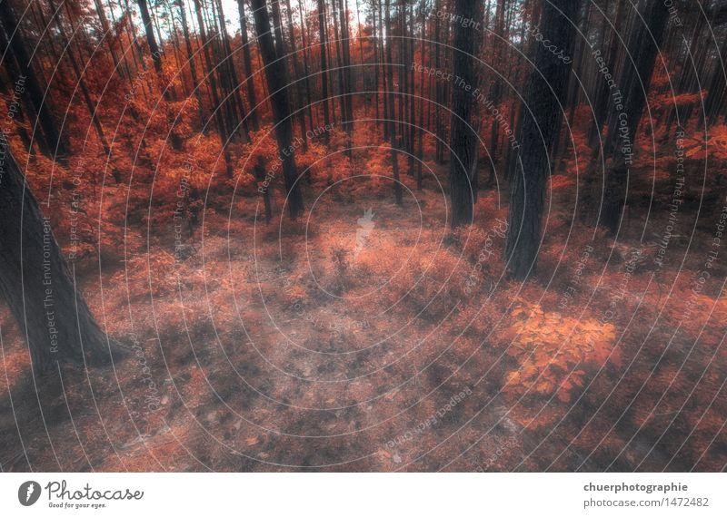 F O R E S T . . . Umwelt Natur Pflanze Sonne Sonnenlicht Herbst Wetter Schönes Wetter Baum Gras Sträucher Moos Wildpflanze Wald Fitness Blick Spielen springen
