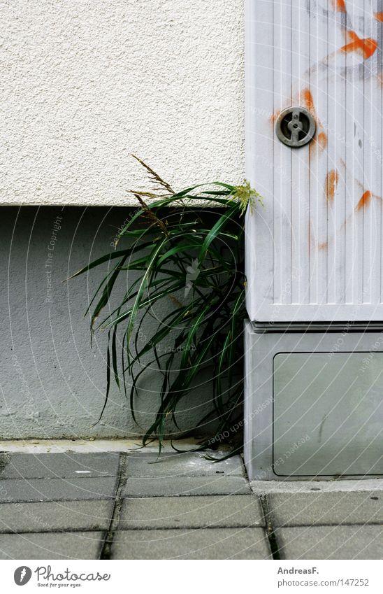 GrünAnlage Elektrizität Energie Häusliches Leben Haus Kabel Wand Stadt Pflanze Gras verstecken verborgen durchwachsen Natur Park grau Garten Gartenbau