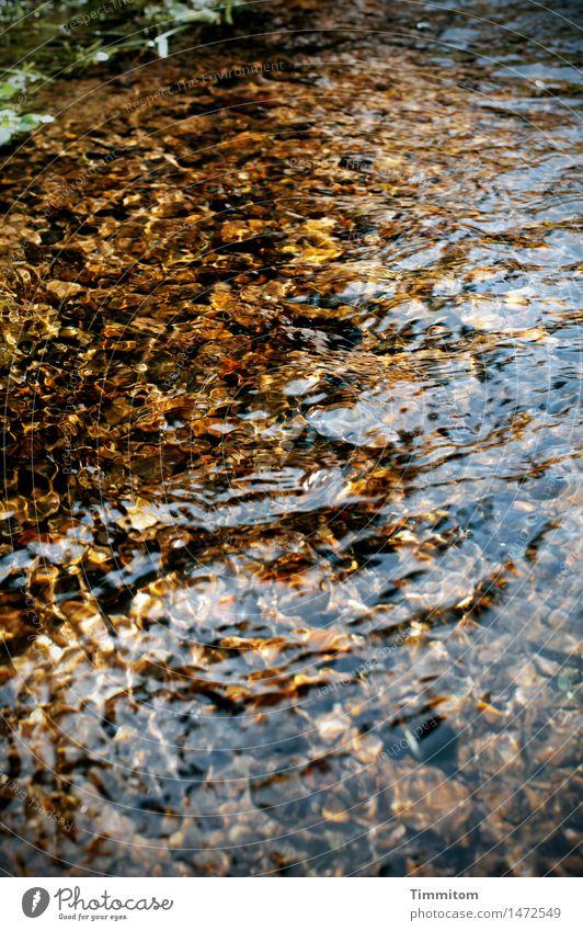 Ein gutes Jahr! Natur Wasser Freude Umwelt Gefühle Glück leuchten gold ästhetisch Schönes Wetter Urelemente Bach