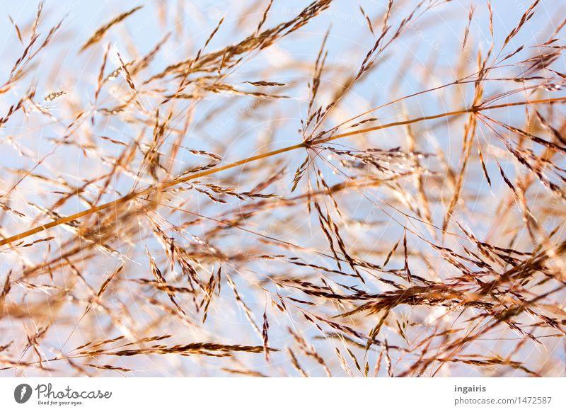 Und es war Sommer..... Himmel Natur Pflanze blau Leben Blüte Wiese Bewegung Gras natürlich braun Stimmung Feld Wachstum leuchten Wandel & Veränderung