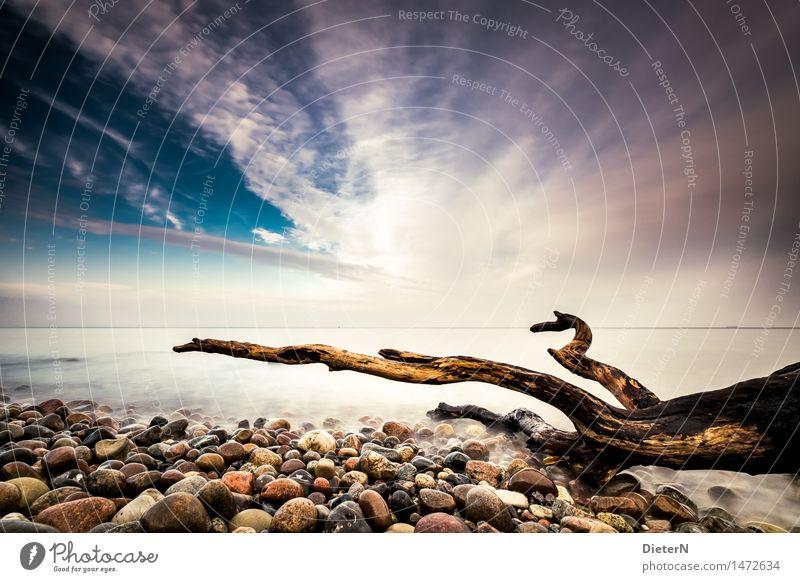 Strandgut Meer Natur Landschaft Sand Wasser Wolken Horizont Herbst Küste Ostsee Stein blau braun schwarz weiß Mecklenburg-Vorpommern steinig Holz Totholz