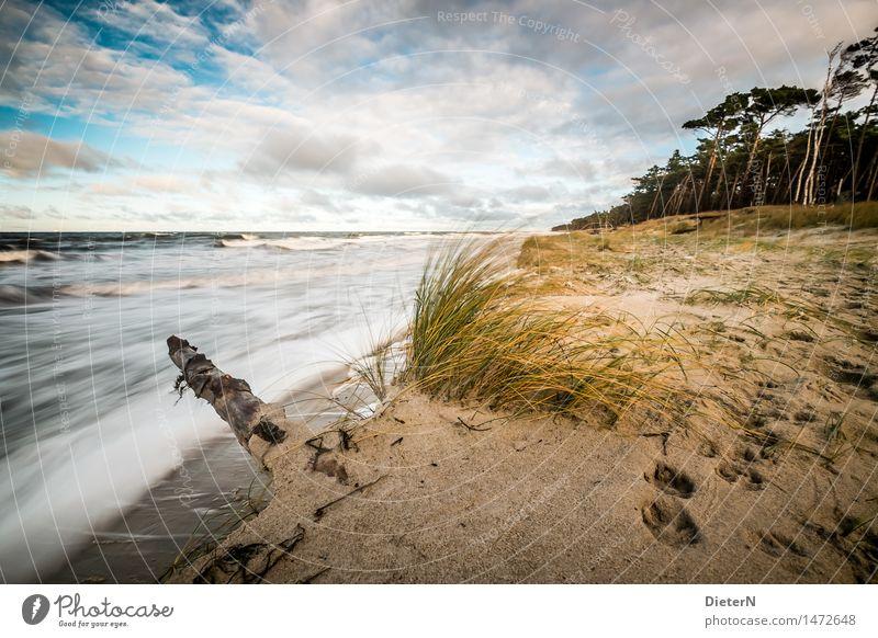 Sturm Natur blau Wasser weiß Baum Meer Landschaft Wolken Strand Wald gelb Gras Küste braun Sand Horizont
