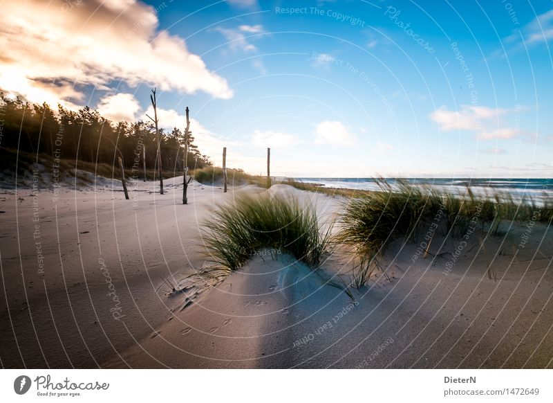 Gewächse Strand Meer Wellen Natur Landschaft Sand Wasser Wolken Horizont Wetter Wind Sturm Küste Ostsee blau braun grün weiß Darß Gischt Mecklenburg-Vorpommern