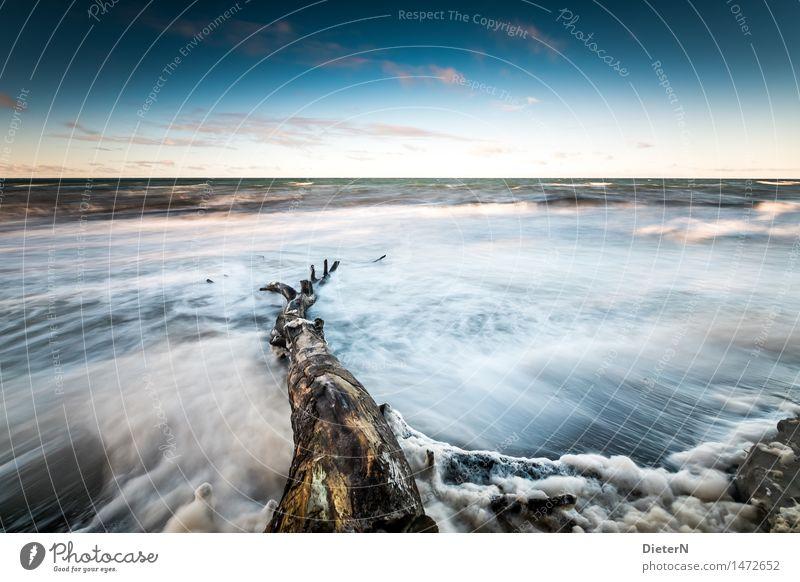 Stamm Strand Meer Wellen Natur Landschaft Sand Wasser Wolken Horizont Wetter Wind Sturm Küste Ostsee blau braun schwarz weiß Darß Gischt Mecklenburg-Vorpommern