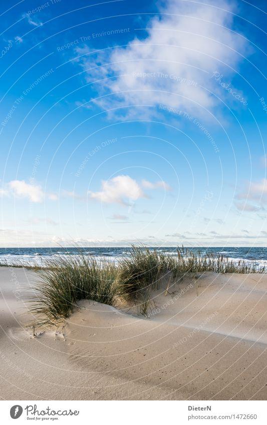 Dünengras Strand Meer Wellen Natur Landschaft Sand Wasser Wolken Horizont Wetter Wind Sturm Küste Ostsee blau braun grün weiß Darß Gischt Mecklenburg-Vorpommern