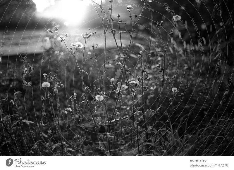 Grafikgarden Natur weiß Pflanze Sonne Blatt schwarz dunkel kalt Herbst Gefühle Blüte Garten Sträucher Coolness Sauberkeit Grafik u. Illustration